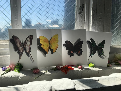 Butterfly Greeting Card 4Pack