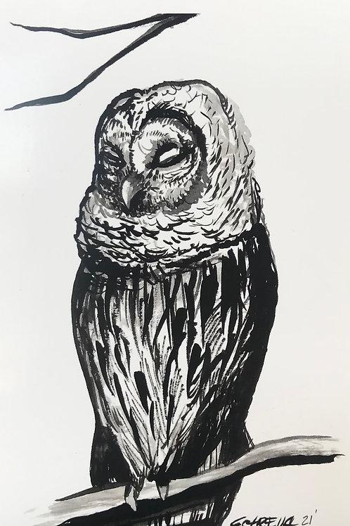 Owl Medicine Postcard