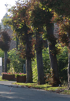 eglise auberville-2.jpg
