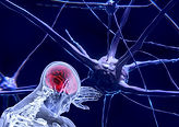 neurons-3743011__340.jpg