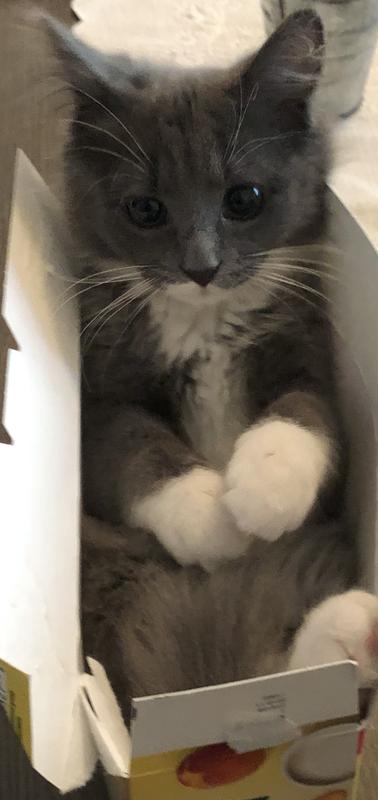 Eppinger's Cat Natasha