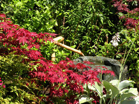 jardin12.jpg