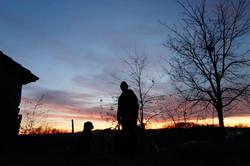 Sonnenuntergang Amar Labradors