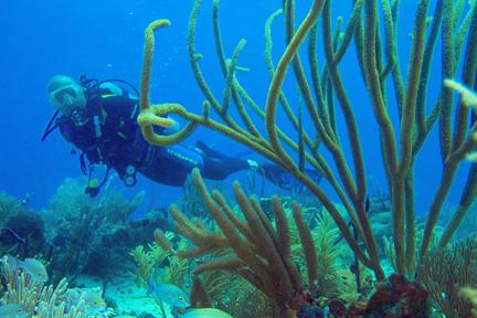 384[1].38 DR - Soft coral .jpg