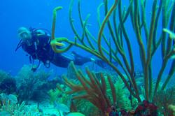 Parque reef soft corals