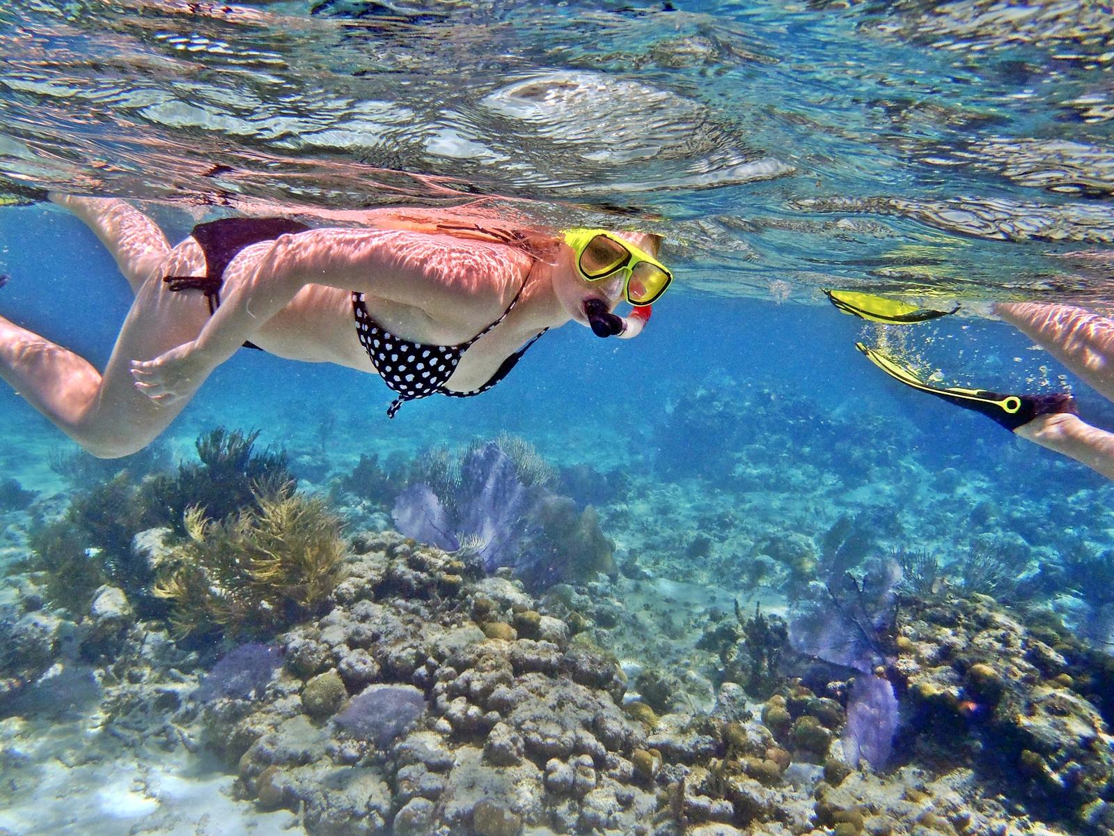 Snorkeling in Catalina Island