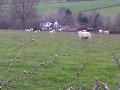 Ann Bull of Cubley, farmer