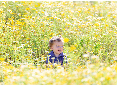 San Diego Wildflower Mini Sessions
