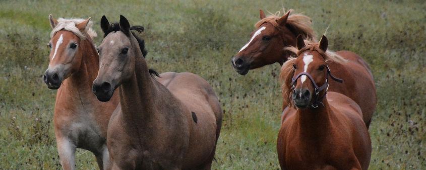 Horses 2020 2.jpg
