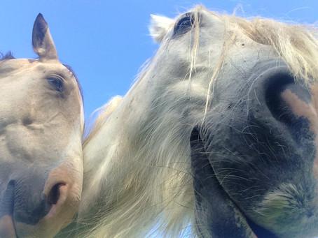 Was zaubert (d)einem Pferd und dir ein Lächeln ins Gesicht?
