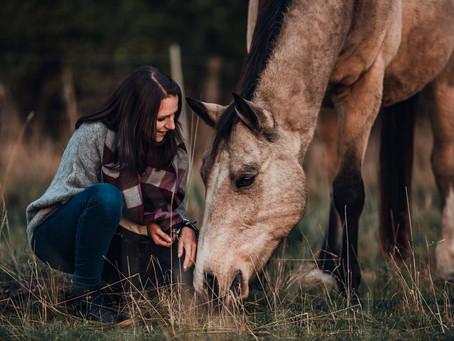 Ist das Pferd nur ein Spiegel?