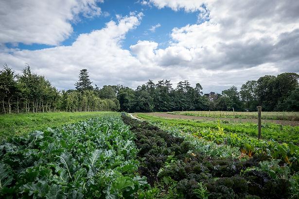 Front field veg beechparkecofarm.jpg
