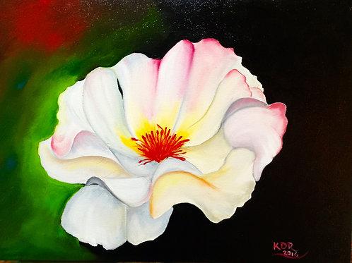 Chromatic Rose