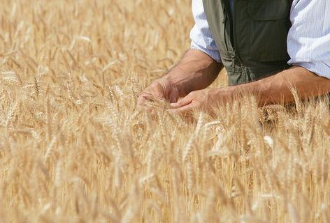 Agricultură (Cultură mare)