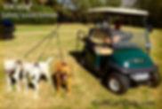 GCD 3 dog tagged.jpg