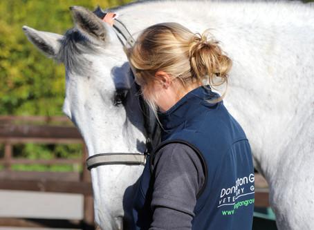 Equine Veterinary Nurse Vacancy