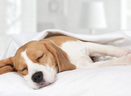 Pet Health Plans - Post 2 Pet