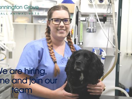 Trainee small animal Veterinary Nurse