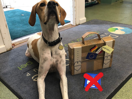 Pet travel post Brexit