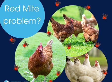 Poultry Red Mite -  a pesky problem.