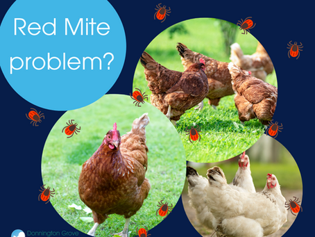 Poultry Red Mite -  a pesky problem.