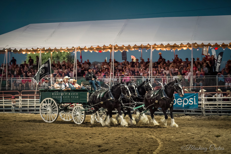 Worlds Oldest Rodeo