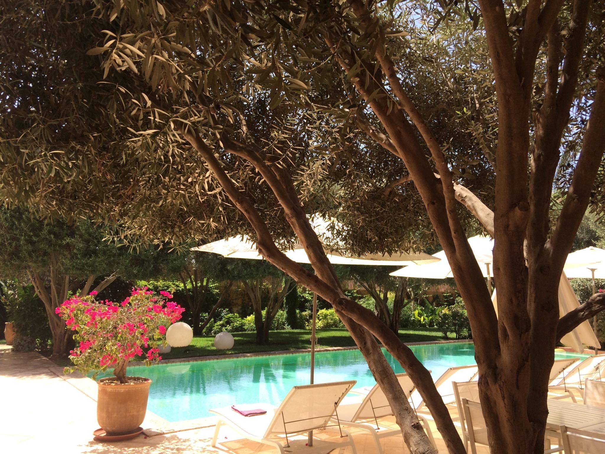 jardin piscine IMG_0103