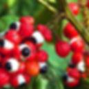 Guarana spirtonic recette