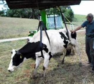 Sherborne-Cow-2-300x225_edited.jpg