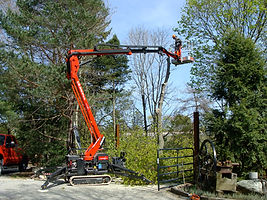 Aerial Lift/Pruning