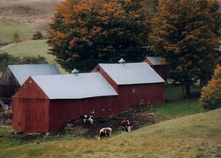 Old Farms