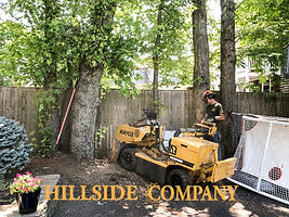 Stump Grinding/Stump Removal