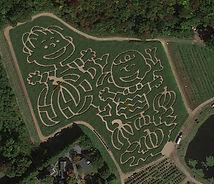 Wild Wild West Corn Maze