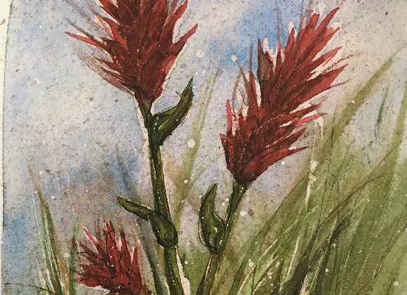 """Indian Paintbrush"""