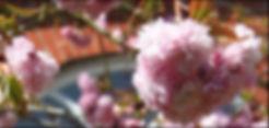 blossom against window 0412 widecrop (2)