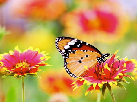 How to Attract Birds, Bees, and Butterflies to your Garden