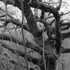 Good Birth Tree