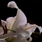 A Botanical Study 2