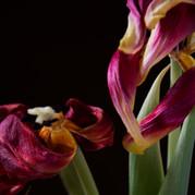 A Botanical Study 4