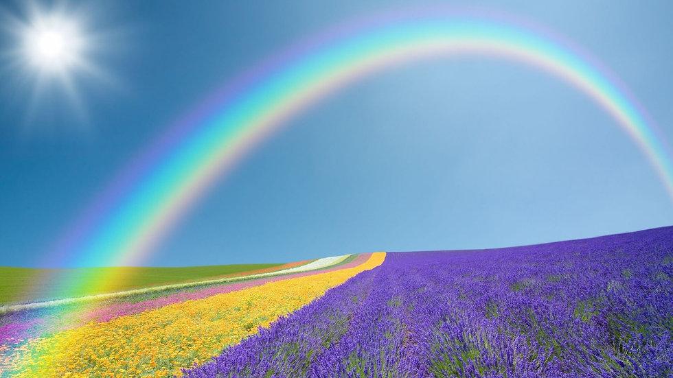 Arc-en-ciel Soleil champ de fleurs.jpg