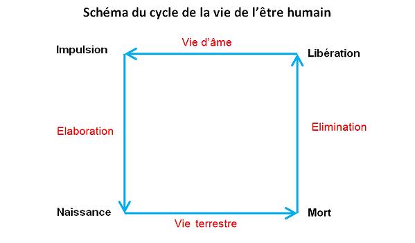 Schema cycle vie etre humain