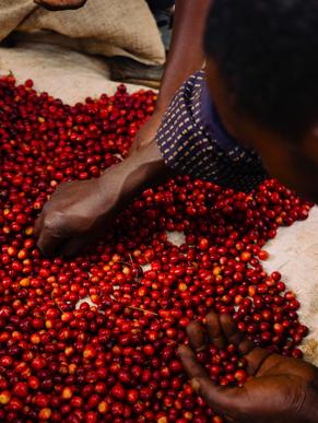 Good Coffee Doing Good - Burundi Nini