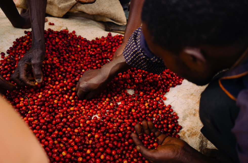 GOOD COFFEE DOING GOOD - BURUNDI NINI