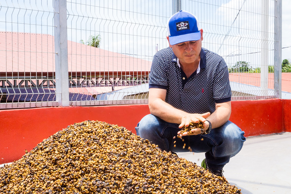 Honey processed coffee drying.