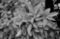 image-about_5eb0d007c1d9d.jpg