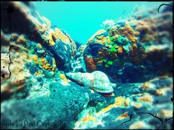 Cape Fanos-Anse de Pirate Cove(2TD)