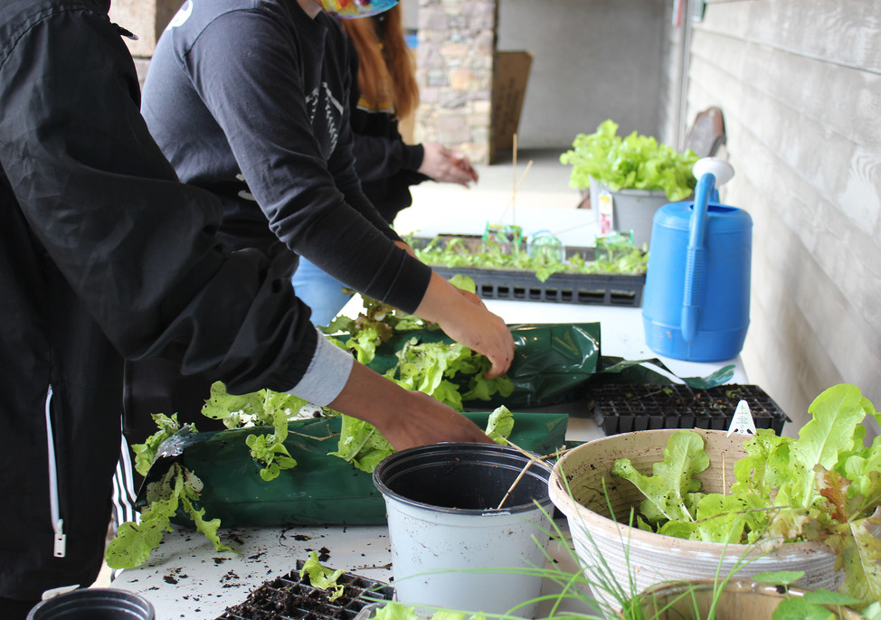 W.A.M.Y. interns filling Grow Bags with vegetable starts