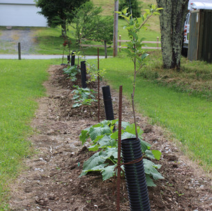 Fruit Trees and Squash