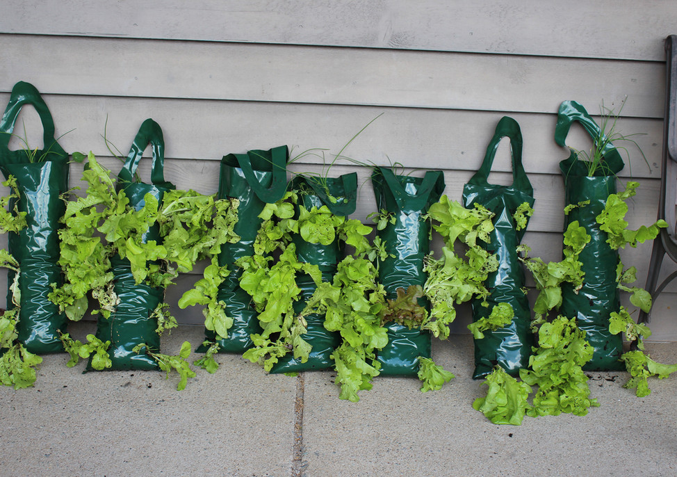 Hanging edible gardens