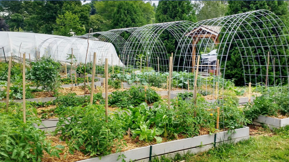 Grow Your Own Fresh Food Series